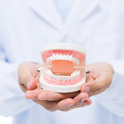 A dentist's hands holding a model of dentures